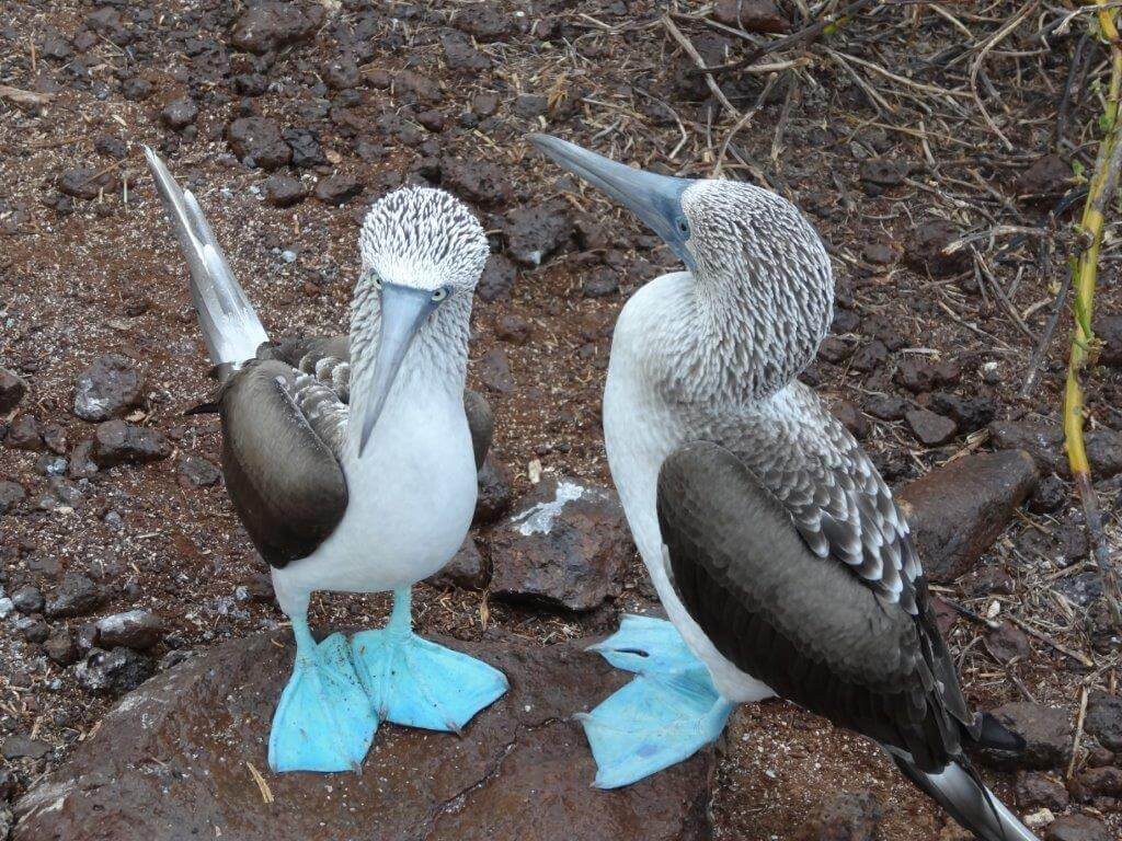 Grupos de Viagens Especiais Galápagos com Equador 2014