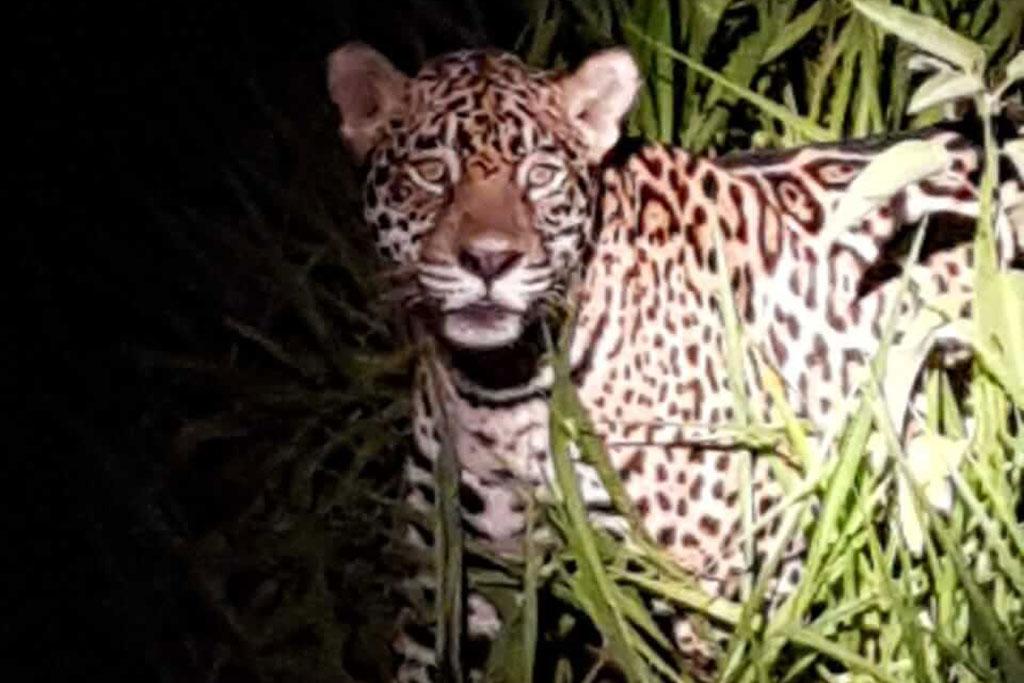 Grupos de Viagens Especiais Fazenda San Francisco Pantanal