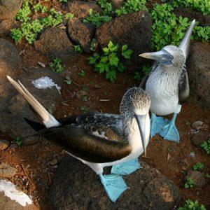 Equador e Galápagos