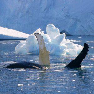 Groenlândia e Islândia